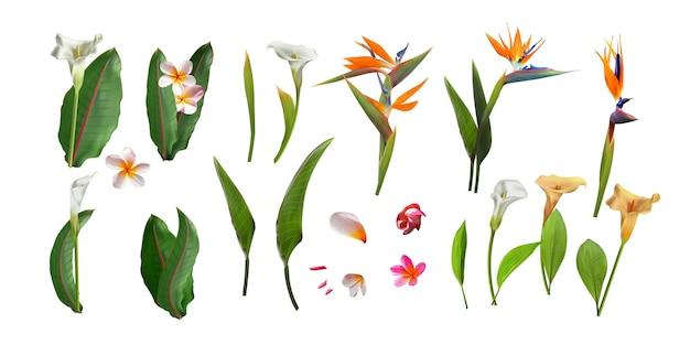 Blumenstrauß von blumen mit dem exotischen blatt lokalisiert auf weißem hintergrund. Premium Vektoren