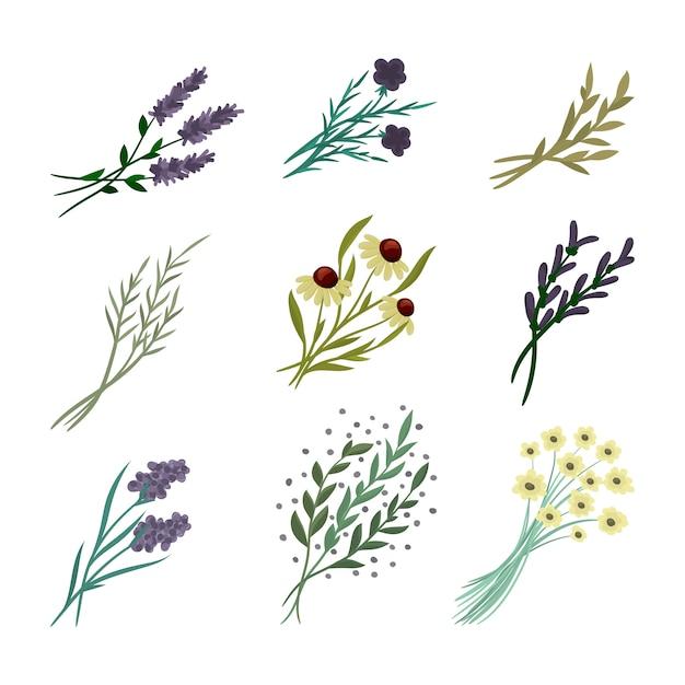 Blumenzusammensetzung. set aus blumen Kostenlosen Vektoren