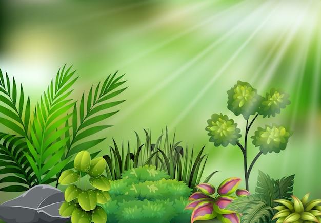 Botanische betriebsansicht auf sonnenlicht Premium Vektoren