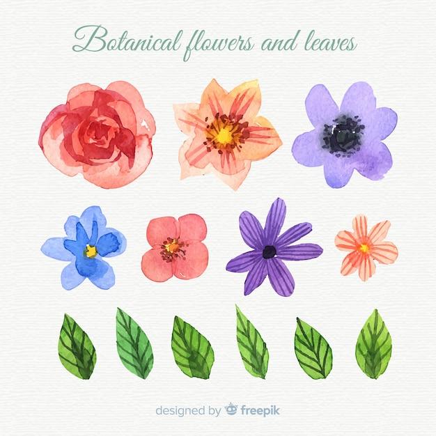 Botanische blumen und blätter des aquarells Kostenlosen Vektoren