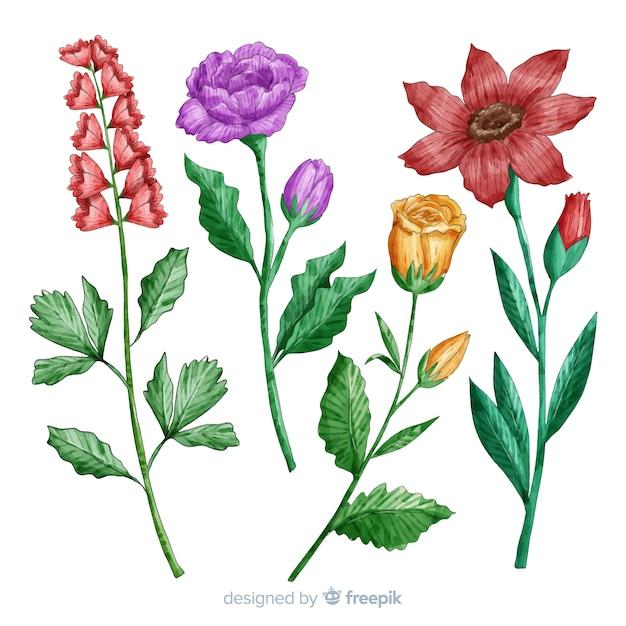 Botanische blumen- und blattsammlung Kostenlosen Vektoren