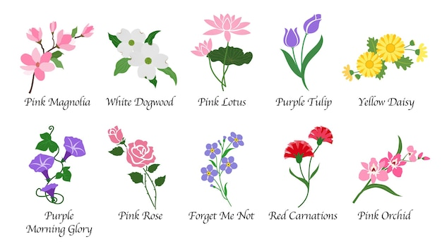 Botanische gartenblume der organischen natur isolierte sammlung Premium Vektoren