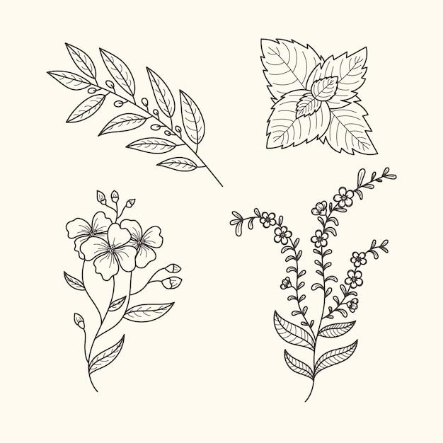 Botanische kräuter und blumen vintage-stil Kostenlosen Vektoren
