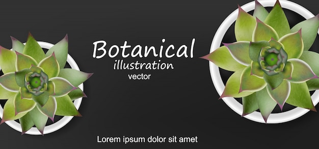 Botanischer hintergrund der sukkulenten Premium Vektoren
