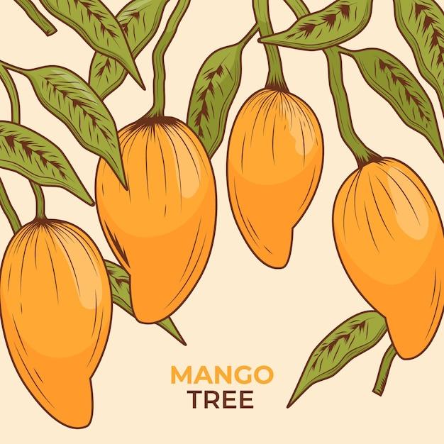 Botanischer mangobaum mit blättern Kostenlosen Vektoren