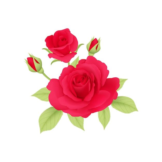 Bouqet rote rosen vektor Premium Vektoren