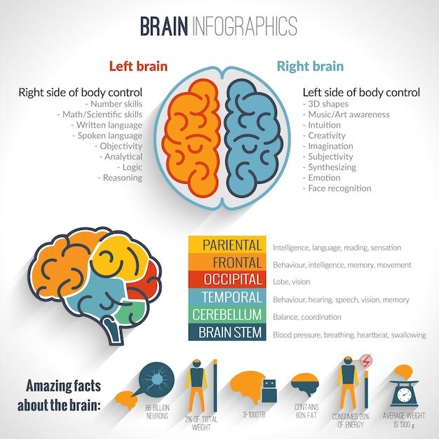 Brain inforgaphics set Kostenlosen Vektoren