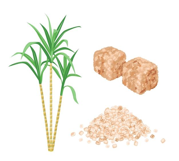 Brown rohrzuckerwürfel pflanzen und sandzuckerhaufen Premium Vektoren