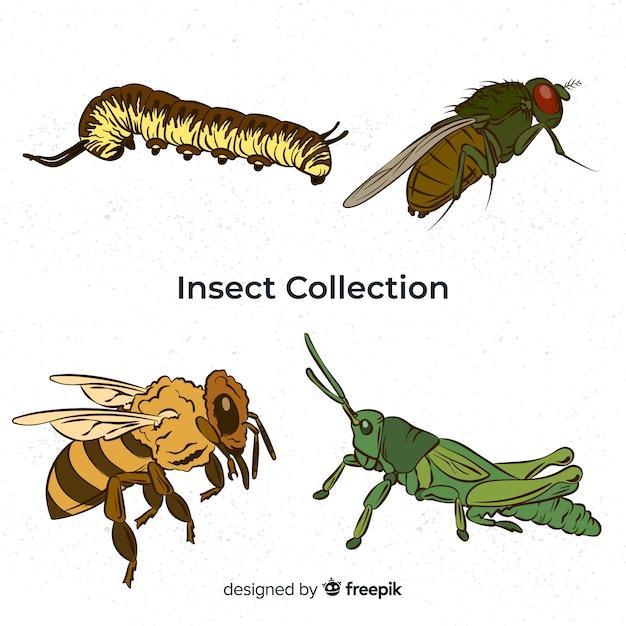Bunte hand gezeichnete insektensammlung Kostenlosen Vektoren