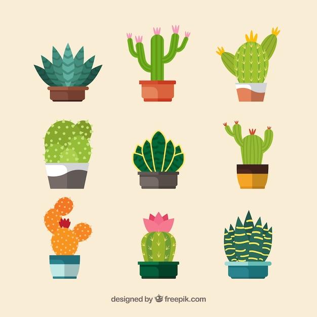 Bunte kaktuskollektion Kostenlosen Vektoren