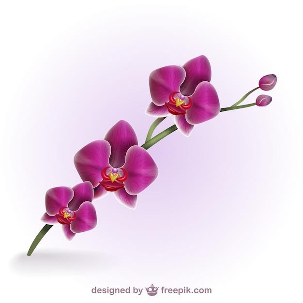 Bunte künstlerische Orchidee | Download der kostenlosen Vektor