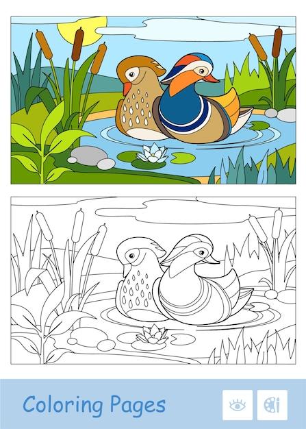 Bunte schablone und farblose konturillustration einer mandarinenente, die auf einem waldfluss nahe schilf und seerosen schwimmt. vogelentwicklungsaktivität für kinder. Premium Vektoren