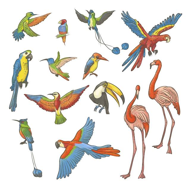 Bunte strukturierte skizze gesetzt von hand gezeichnet auf einem weißen hintergrund. sammlung von hellen exotischen tropischen vögeln. isolierte umrissillustration eine vielzahl von flamingos, papageien und kolibris. Premium Vektoren