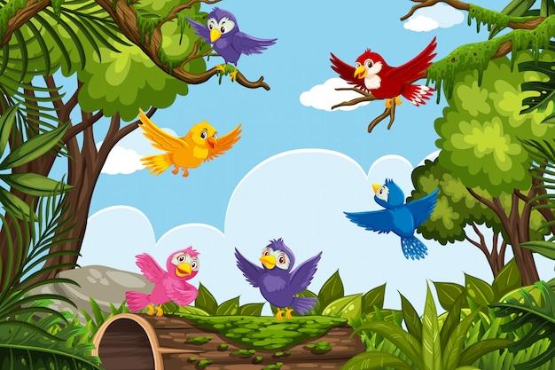 Bunte vögel in der naturszene Premium Vektoren