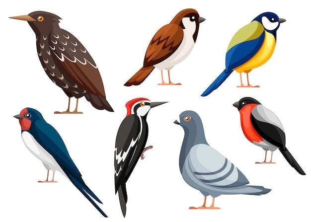 Bunte vogelsammlung. taube, spatz, meise, schwalbe, specht, star, gimpel. vogelikone. illustration auf weißem hintergrund Premium Vektoren