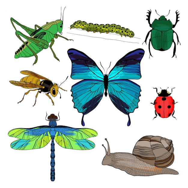 Bunte zeichnung insekten sammlung Kostenlosen Vektoren