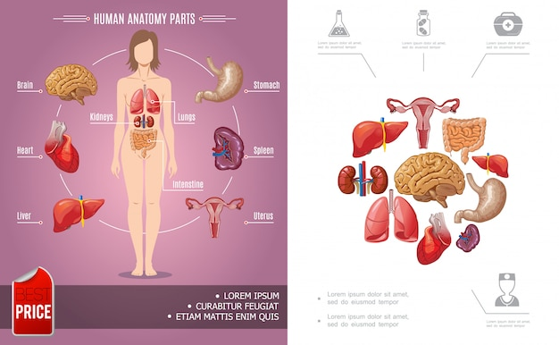Bunte zusammensetzung der menschlichen anatomie der karikatur mit körperteilen der frau und medizinischen ikonen Kostenlosen Vektoren