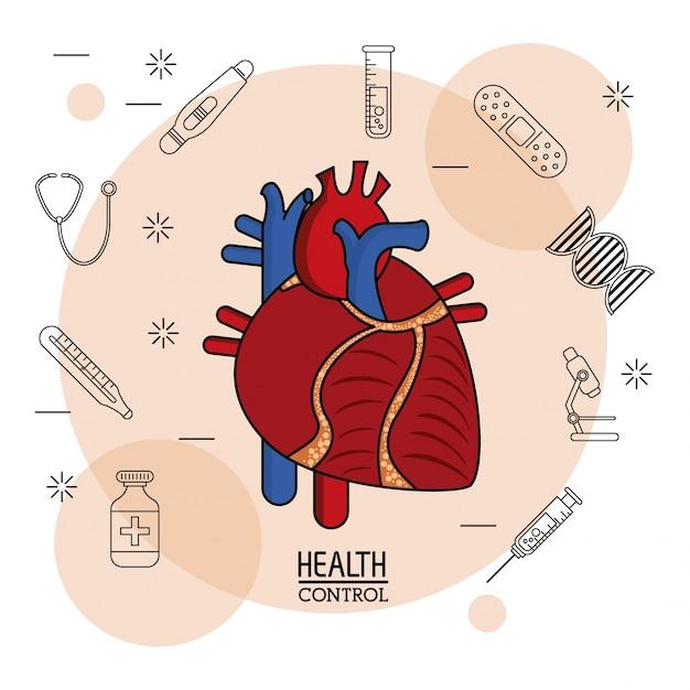 Buntes Herz-Kreislauf-System in Nahaufnahme | Download der Premium ...