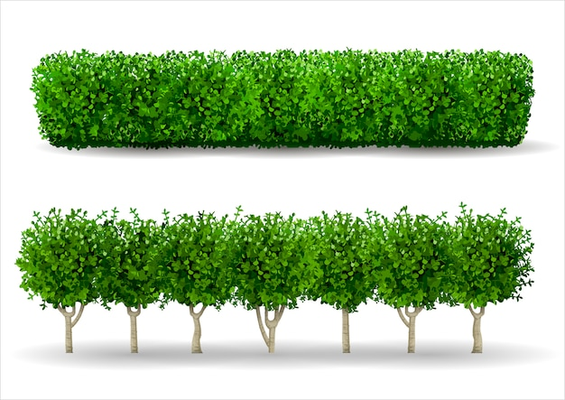 Bush in form einer grünen hecke Premium Vektoren