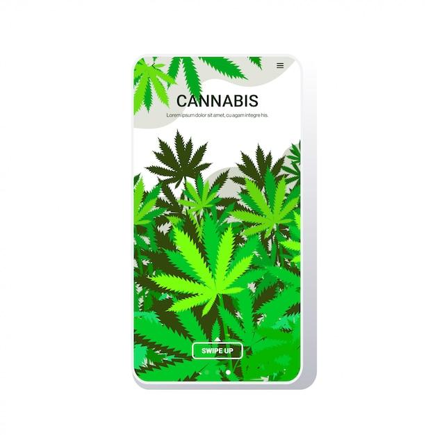 Cannabis verlässt industrielle hanfplantage wachsende marihuana-pflanze kommerzielles geschäft drogenkonsum konzept telefon bildschirm mobile app kopie raum Premium Vektoren