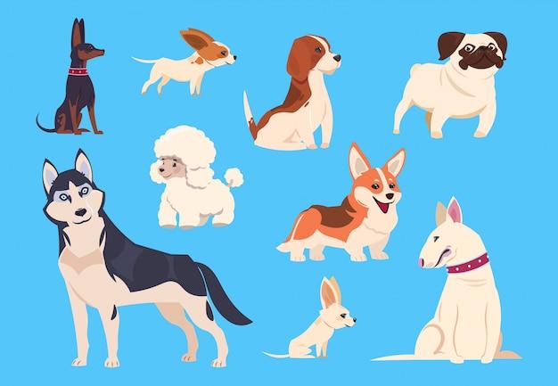 Cartoon hunderassen. corgi und husky, pudel und beagle, mops und chihuahua, bullterrier. comic-tierfiguren Premium Vektoren