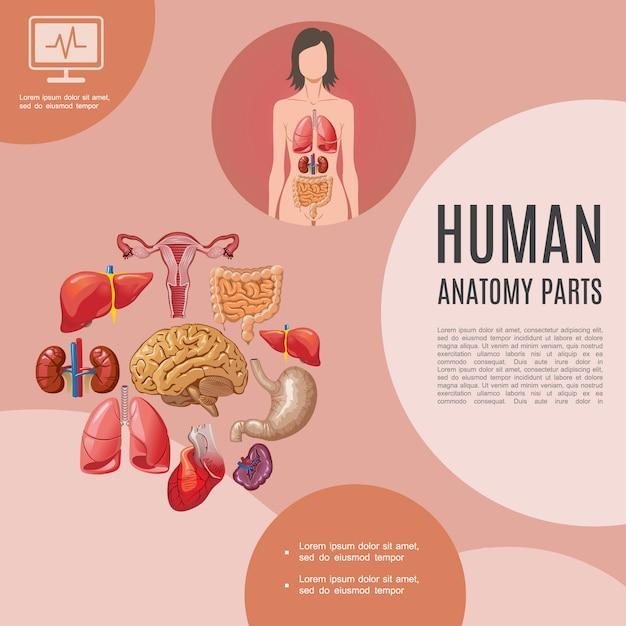 Cartoon menschliche anatomie vorlage mit frau körper lunge leber nieren herz gehirn magen magen milz gebärmutter Kostenlosen Vektoren