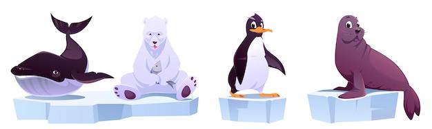 Cartoon wilde tiere auf eisschollen seewal, weißbär, pinguin und robbe. Kostenlosen Vektoren