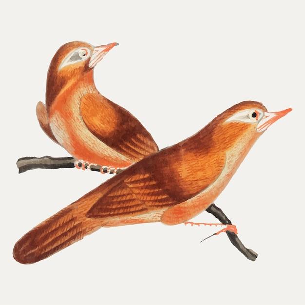 Chinesische malerei, die vögel von china kennzeichnet. Kostenlosen Vektoren