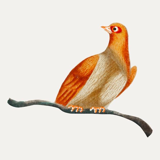 Chinesischer anstrich eines vogels. Kostenlosen Vektoren