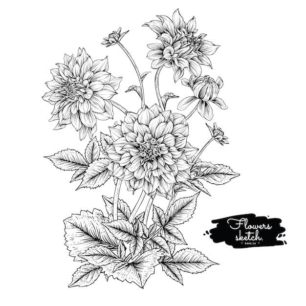 Dahlia leaf und blumenzeichnungen Premium Vektoren