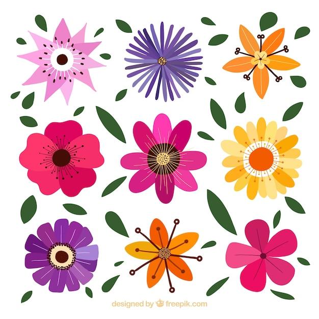 Dekorative blumen mit verschiedenen designs Premium Vektoren