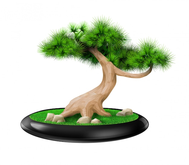 Dekorative bonsaibaumkiefer im topf Premium Vektoren