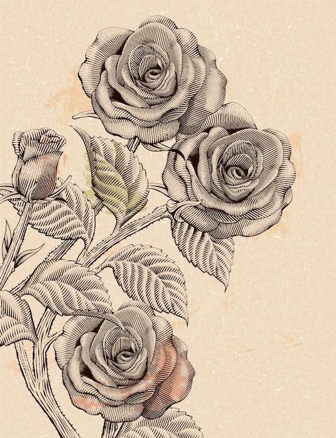 Dekorative elemente der retro-rosen, blumen im radierungsschattierungs- oder tintenzeichnungsstil auf beigem hintergrund Premium Vektoren