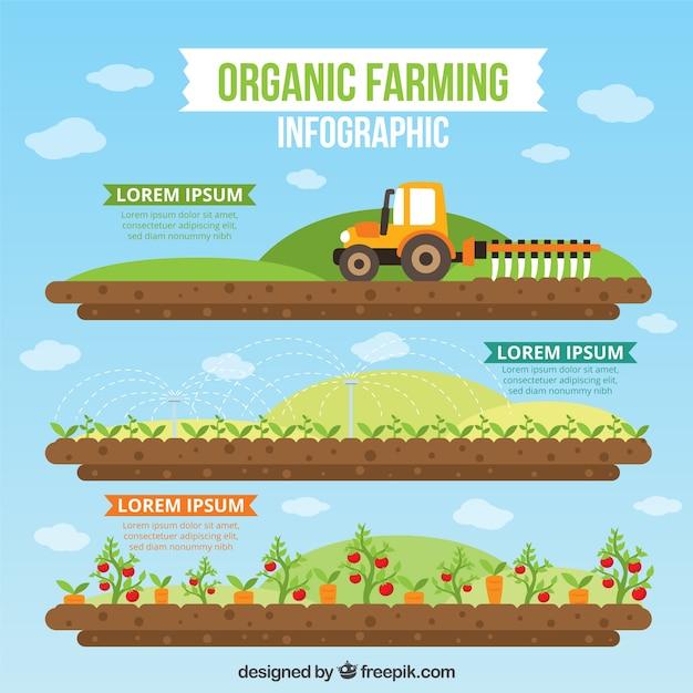 Der ökologische landbau infographie in flaches design Premium Vektoren