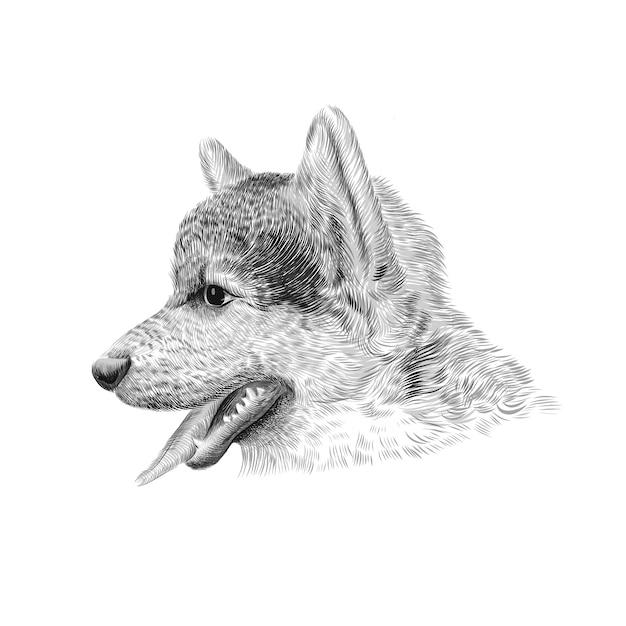 Der pembroke welsh corgi tricolor welpe, eine hunderasse, die rinder hütet. haustierprofilporträt, nahaufnahme-skizze. illustration. Premium Vektoren