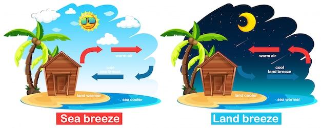 Diagramm, das zirkulation der see- und landbrise zeigt Kostenlosen Vektoren