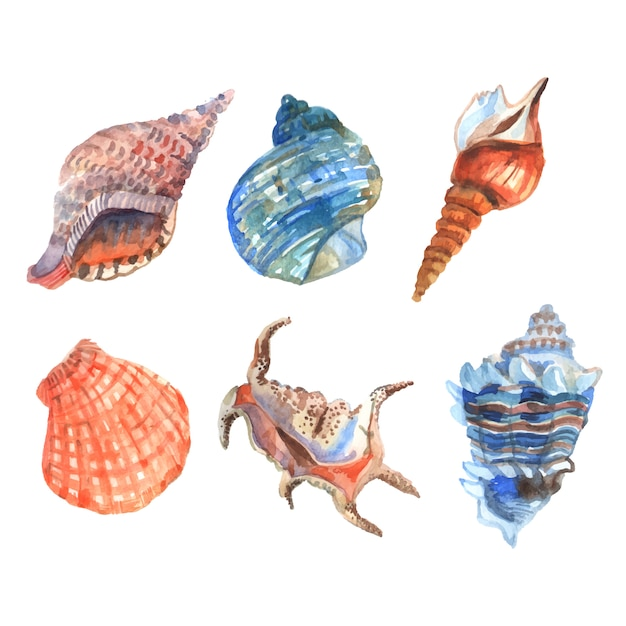 Die dekorativen ikonen der aquarelloberteilstarfishcockleshells stellten lokalisierte vektorillustration ein Kostenlosen Vektoren