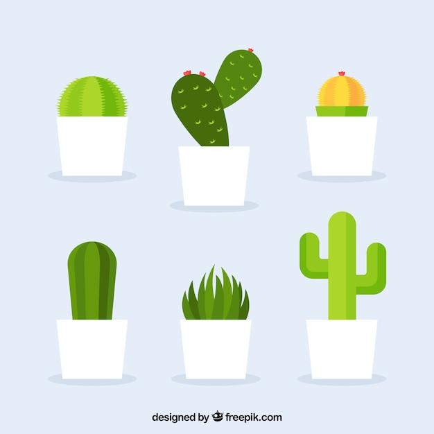 Die vielfalt der kaktus in flaches design Kostenlosen Vektoren
