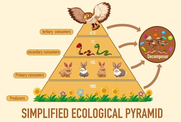 Die wissenschaft vereinfachte die ökologische pyramide Kostenlosen Vektoren