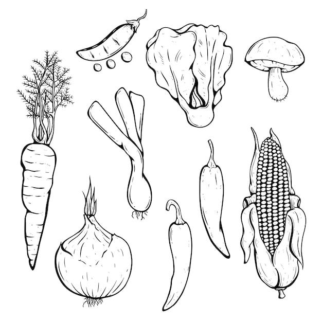 Doodle frische gemüsesammlung mit chili, mais, karotten und pilzen Premium Vektoren