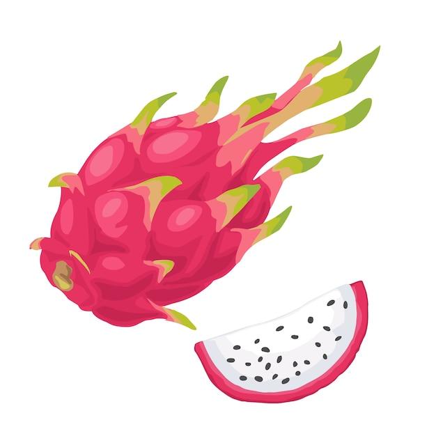 Drachenfrucht ganze und scheibenillustration Premium Vektoren