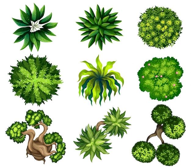 Draufsicht auf die verschiedenen pflanzen Kostenlosen Vektoren