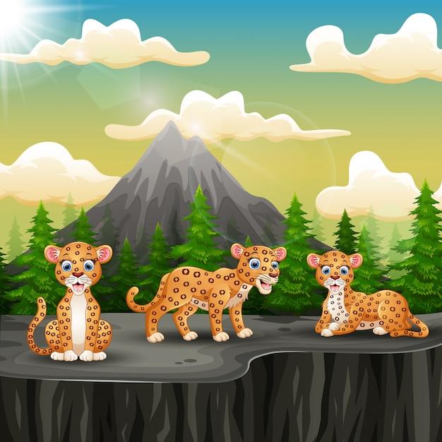 Drei leopardkarikatur, die auf dem berg eine klippe genießt Premium Vektoren