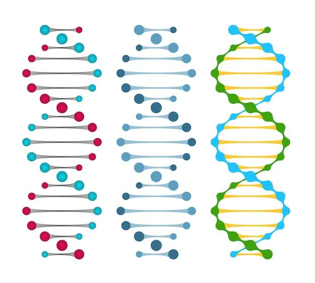 Drei varianten von doppelstrang-dna-molekülen zeigen die nukleotidpaare in einer doppelhelix-vektorillustration Kostenlosen Vektoren