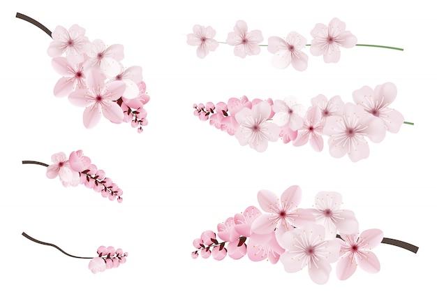 Dunkle und hellrosa sakura-blüten. Premium Vektoren