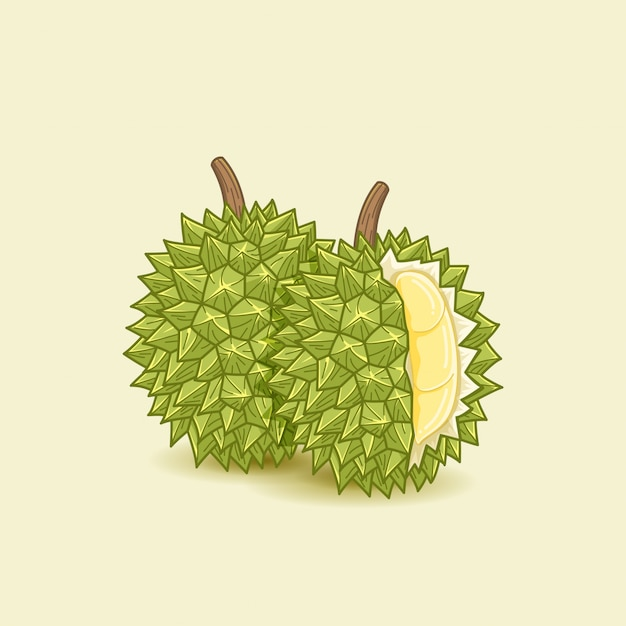 Durian essen abbildung Premium Vektoren