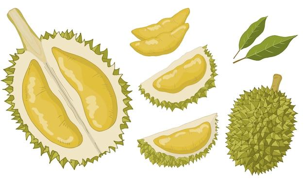 Durian satz von isolierten gegenständen. Premium Vektoren