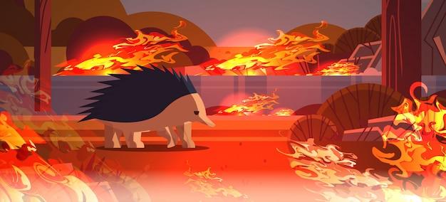 Echidna flucht vor bränden in australien tiersterben in lauffeuer bushfire naturkatastrophe konzept intensive orange flammen horizontal Premium Vektoren