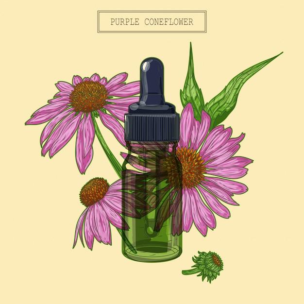 Echinacea blumen und grüne glastropfer Premium Vektoren