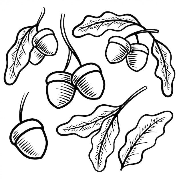eichel vintage illustration hand gezeichnet  premiumvektor